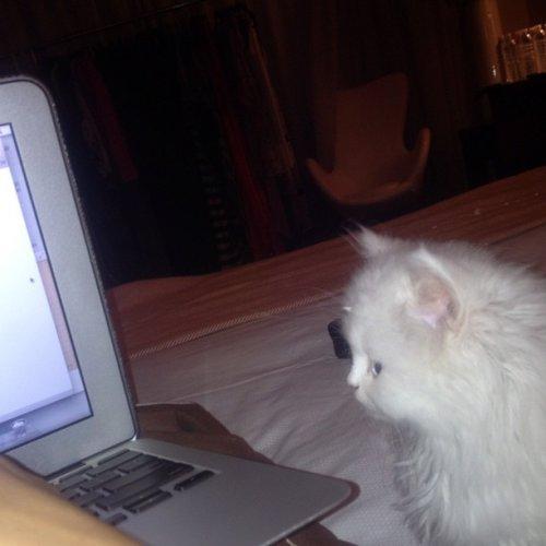 Kim Kardashian aime beaucoup sa chatte