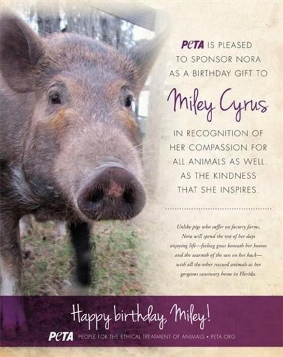 PETA offre un cochon à Miley Cyrus pour ses vingt ans