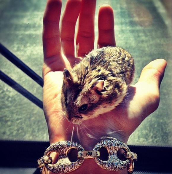 Justin Bieber accusé de maltraitance envers son hamster Tac