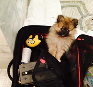Miley Cyrus a déjà un nouveau chien