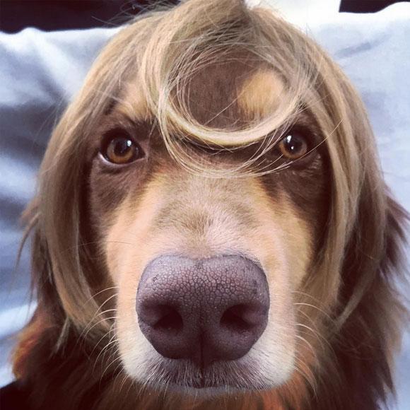 Amanda Seyfried se coupe les cheveux et les donne pour la bonne cause