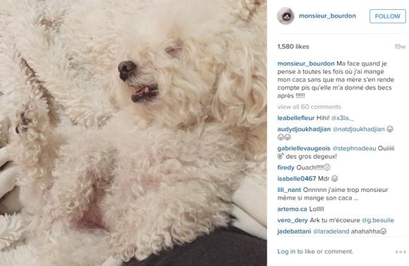 Cadeau de Noël d'HollywoodPQ - La vie de chien de Monsieur Bourdon
